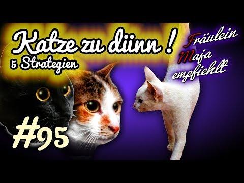 Katze zu dünn - 5 Tipps damit die Samtpfote wieder frisst#095