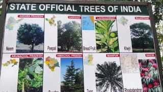 List of Indian State Trees Video in HD State Official Trees Of India State Wise