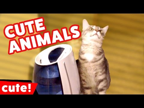 Funniest & Cutest Pet Video Bloopers Caught On Tape Weekly Compilation 2016 | Kyoot Animals