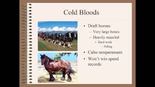 Repeat youtube video Horse Classification