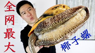 The huge coconut snail of 1,000 yuan and 11.5 kg was not dug by Merlot, and the parasite was dug!