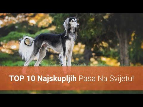 🐕 Najskuplji Psi – Top 10 Najskupljih Pasmina Pasa Na Svijetu!
