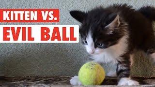 Kitten Vs. Evil Ball || Ball So Hard Kitty