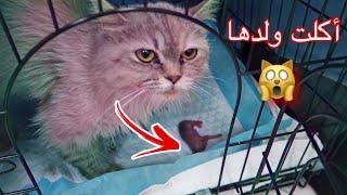 انقاذ قطه حامل !! رموها اصحابها بالكورنيش 😱