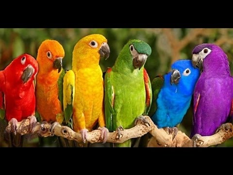 Parrots Majestic Birds Nature Documentary HD