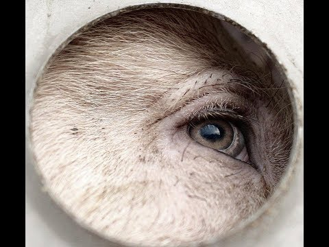 Richard Dawkins - Ja, dyr føler smerte!