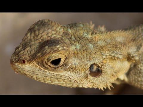 Lizard in food sends children to hospital - Worldnews.com