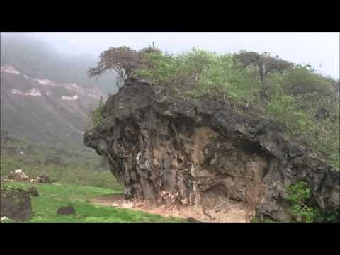 Salalah - The Best Video - A Road Trip to the Beautiful Greenery !!