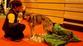 Triple-Sという犬のトレーニング、セミナー他をやっている団体による 犬...