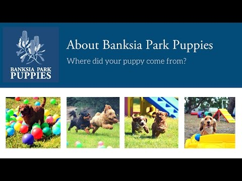 Banksia Park Puppies - Where did your puppy come from?