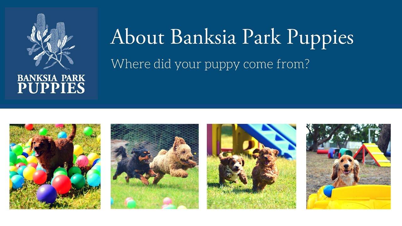 Home   Banksia Park Puppies