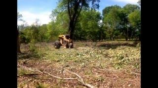 Super T Bell cutting a big oak treeIMG_0346.PNG
