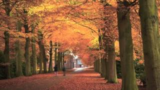 Brain Power Study Music:Sounds of Nature,Relaxing Flute Concentration Music & Focus on Learning