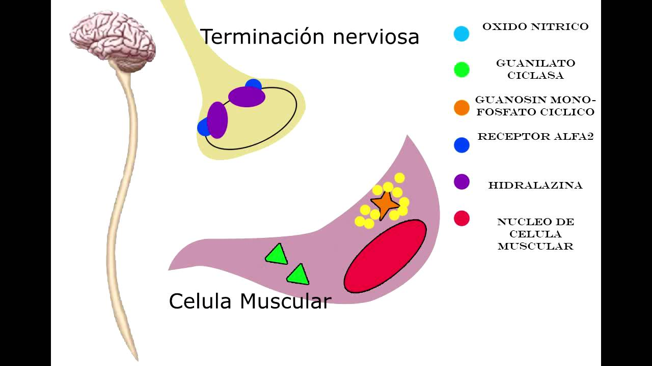 Prazosin Hydrochloride For Cats