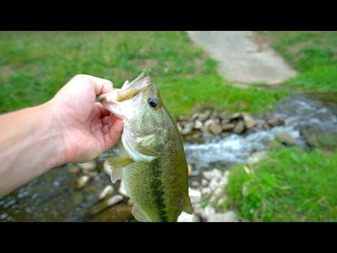 Tiny Urban Creek Fishing In Dallas Texas