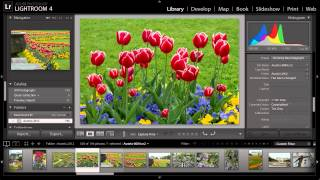 Lightroom for Travel Photography: Metadata and Keywords