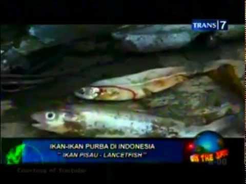 On The Spot Hewan hewan purba di indonesia - YouTube