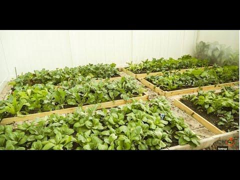 How to start a vegetable garden (开垦新菜园)