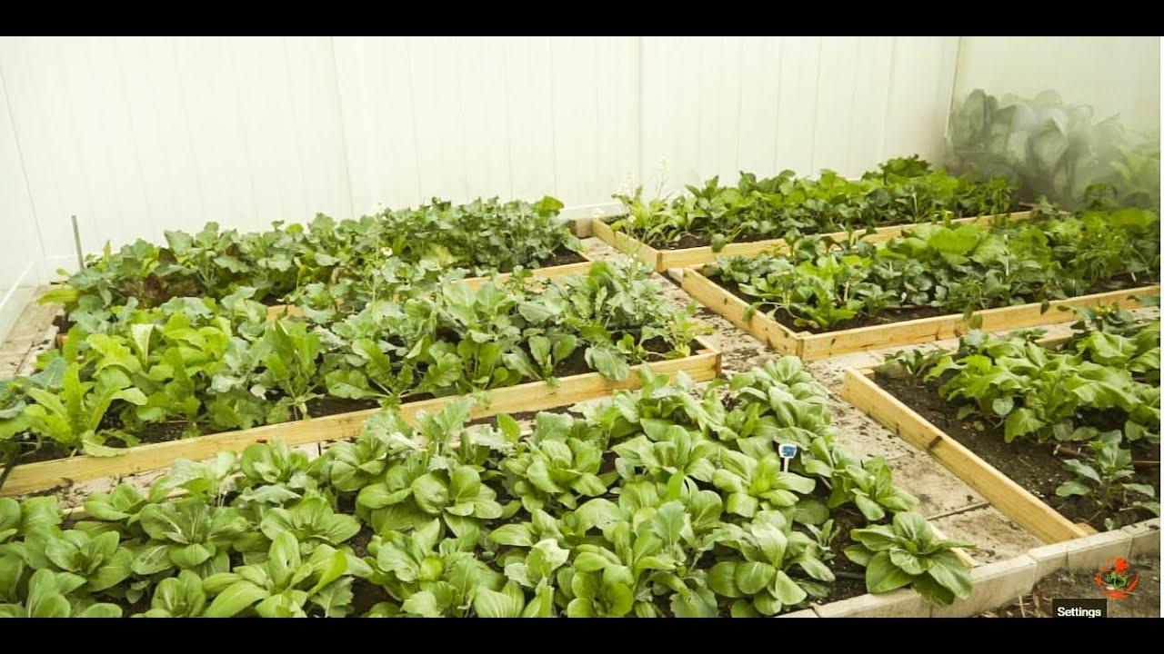 How to start a vegetable garden youtube for Starting a vegetable garden