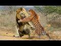 León vs Tigre | ¿Quién Ganaría? | EPIC VERSUS