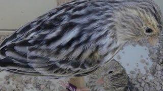 علاج الاسهال عند الطيور بسرعة