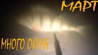 Подводная охота Март Много окуня
