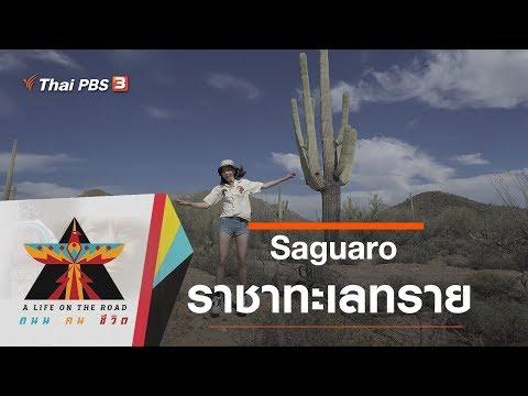 Saguaro : ราชาทะเลทราย - วันที่ 16 Jan 2020