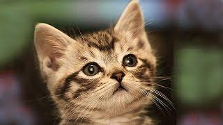 Наши любимые котята и кошки. Our beloved cats and kittens