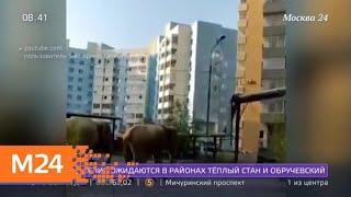 Актуальные новости России и мира за 15 июля - Москва 24