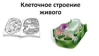 1. Клеточное строение (6 класс) - биология, подготовка к ЕГЭ и ОГЭ 2018