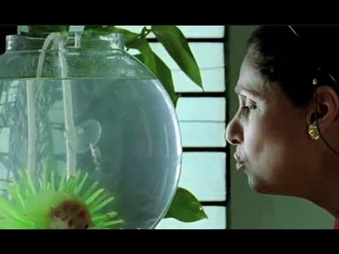 What The Fish 2013 | Dimple Kapadia Interview