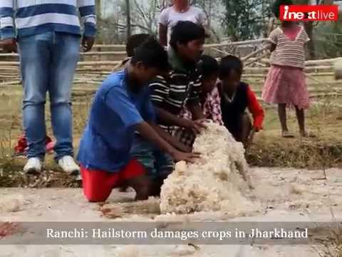 Ranchi: Hailstorm damages crops in Jharkhand