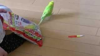 おしゃべりインコのピッピ動画です。 今日のピッピはえさの袋を見て喜ん...