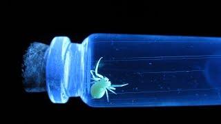 Жуки в ультрафиолете