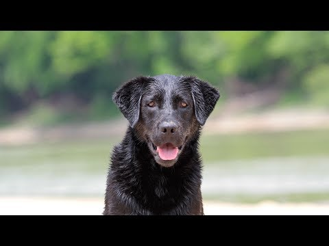 Professional Dog Training - A fun session at the beautiful Kentucky River!