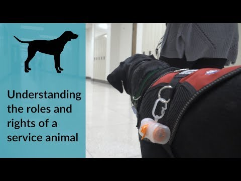 A Guide To Understanding Service Animals