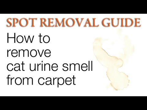 how to remove cat urine smell from carpet spot removal guide youtube. Black Bedroom Furniture Sets. Home Design Ideas