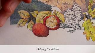 Snippets from the Colour Along Project - Part 1 - The Red Squirrel