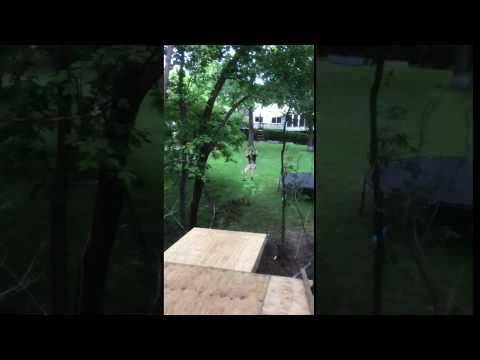 adrian fedorko zipline 2016 07 31 18 07 04 Adrian Slow