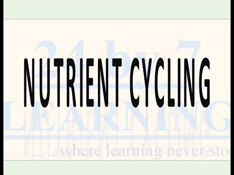 Video 4: Nutrient Cycling