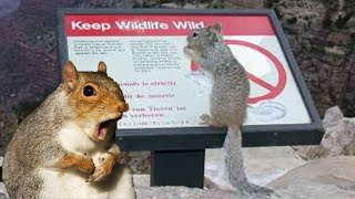 r/MadLads | DON'T FEED THE SQUIRRELS