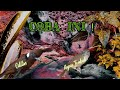 Suara Masteran Cililin Vs Kapas Tembak  Mp3 - Mp4 Download