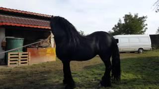 Repeat youtube video Valoarea  cailor   cal de vânzare  2015