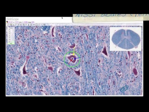 Histology Helper - Nervous System Histology