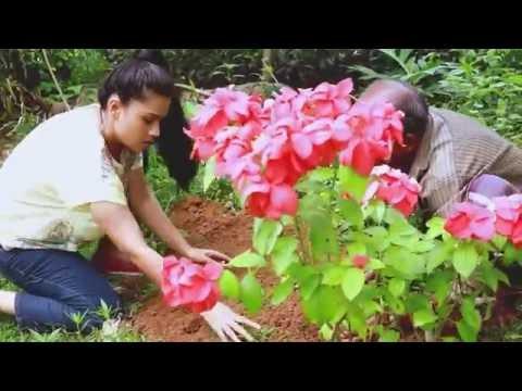 Pooja Umashankar Lest's Plant Tree එන්න, අපි පැලයක් රොපණය කරමු