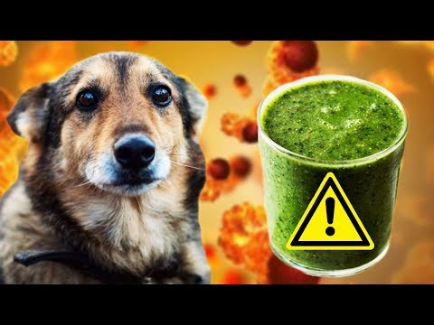 vegans-want-to-give-your-dog-cancer