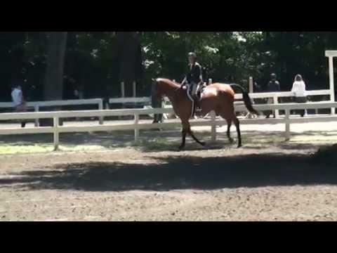 """BRANDO 3'0"""" Pre-Green's at Saratoga Classic Horse Show"""