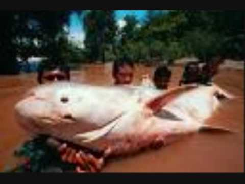 The biggest fish ever caught youtube for What is the biggest fish ever caught