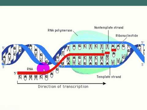 KEYSTONE 6- DNA and its processes