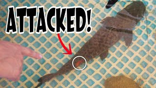 Gambar cover My Fish Were ATTACKED! HERE'S WHAT HAPPENED??